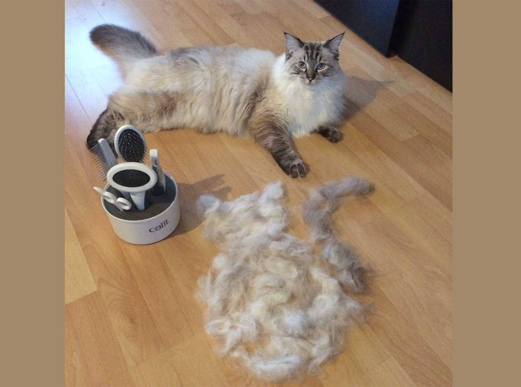 Почему кошка или кот сильно линяет и что делать, если шерсть лезет и выпадает в большом количестве у котенка и взрослого животного