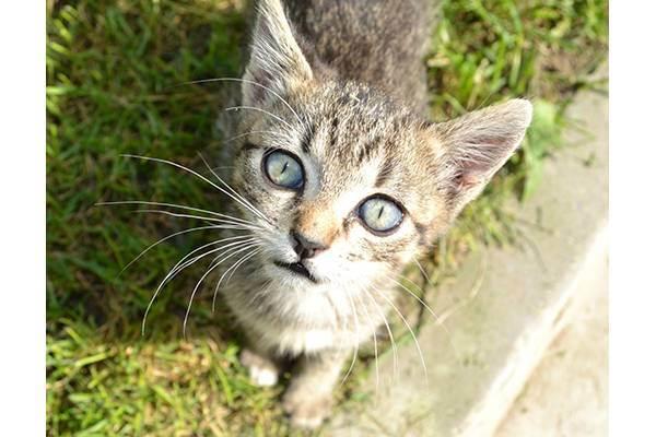 8 причин боли у домашней кошки. подход к распознаванию и оказанию терапевтической помощи своему питомцу
