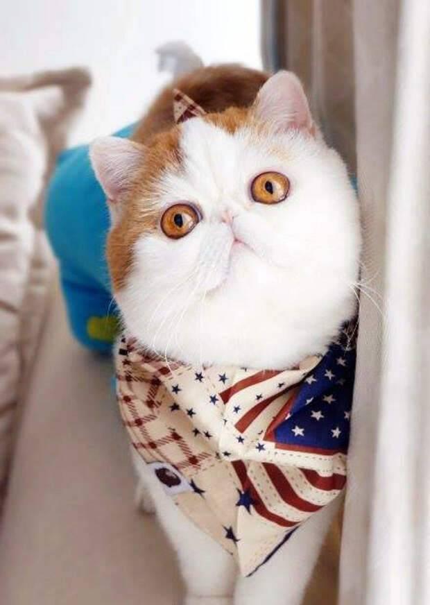 Коты снупи: какая это порода и причины их популярности