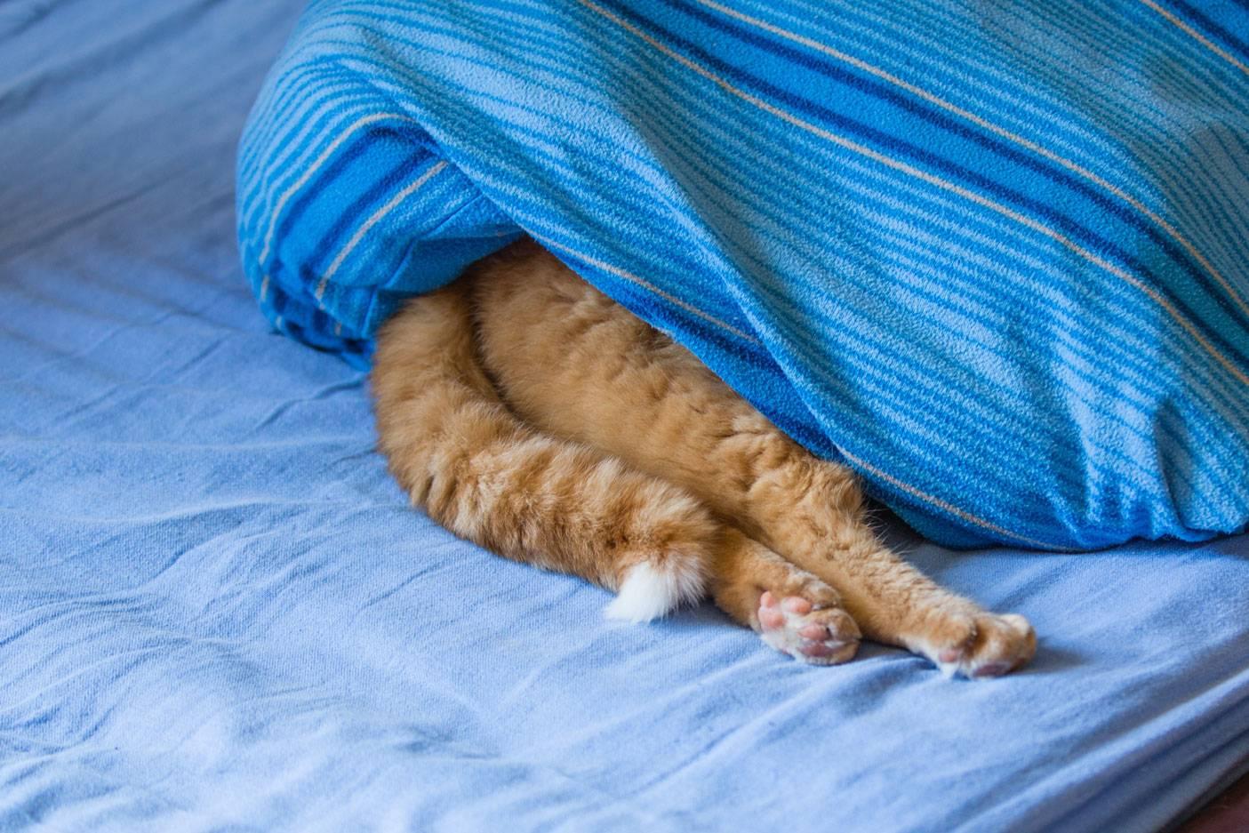 Кошка прячется в темные места: причины