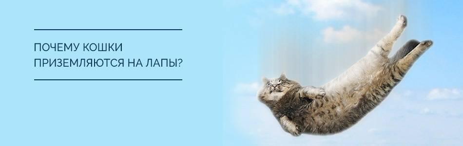 У кошек отказывают задние лапы - причины, диагностика, лечение