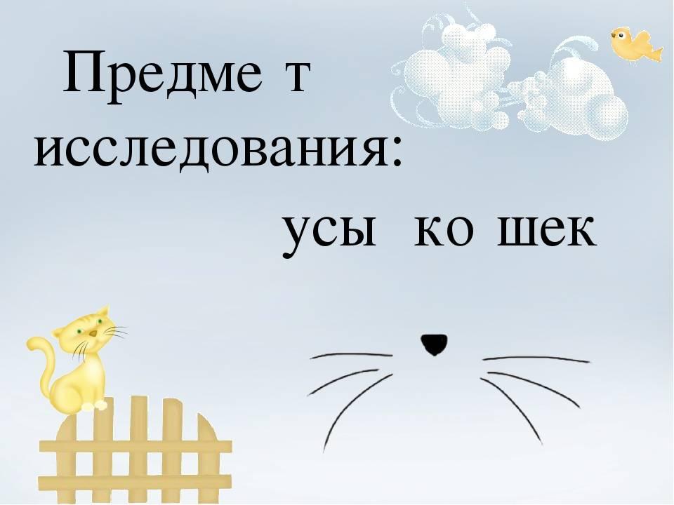 Уход за вибриссами котов