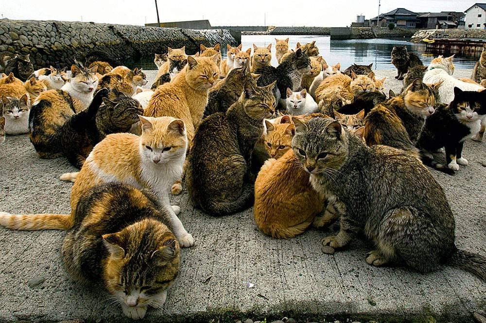 Сколько лет живут кошки в домашних условиях, как определить возраст кота, в том числе по человеческим меркам