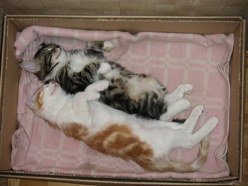 Сколько в норме спят котята в 1–3 месяца, почему малыш стал вялым, постоянно дремлет и не играет?