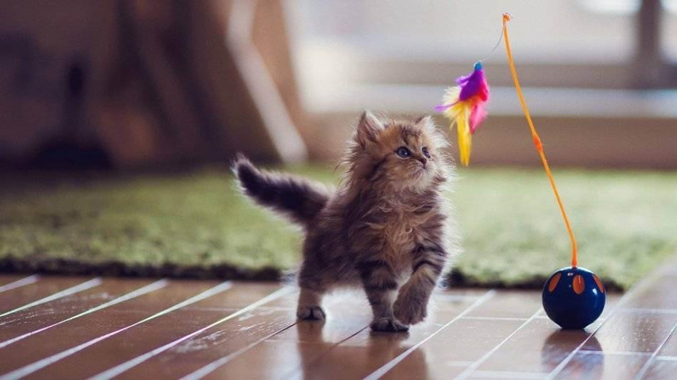 Куда деть любимого кота на время отъезда?