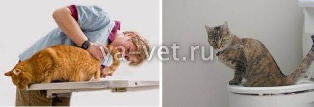 Недержание кала у кота – что делать, в чем причина того, что у кошки не держатся фекалии?