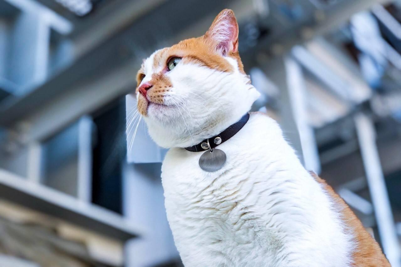 Половое созревание у кошек. инстинкт продолжения рода, или cексуальные кошачьи проблемы