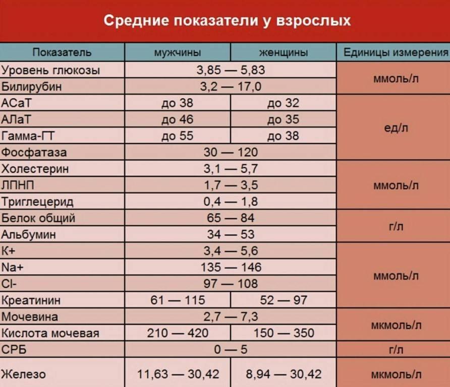 Интерпретация анализов кошки (биохимический анализ крови)