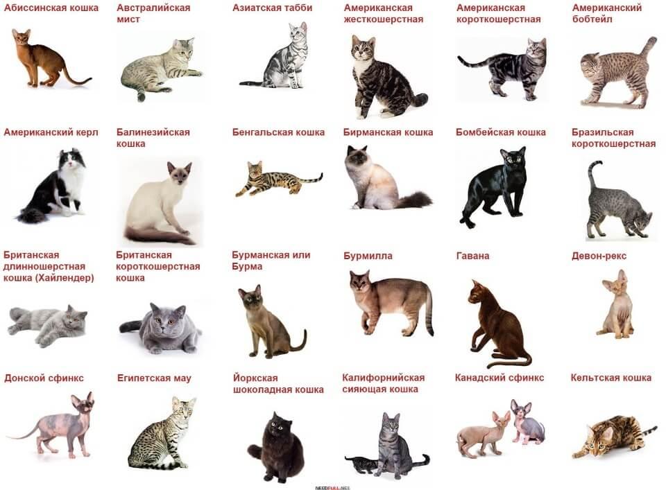 Кот или коша: как определиться с выбором пола? | кот и кошка