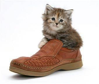 Как адаптировать кошку или кота к новому дому или квартире