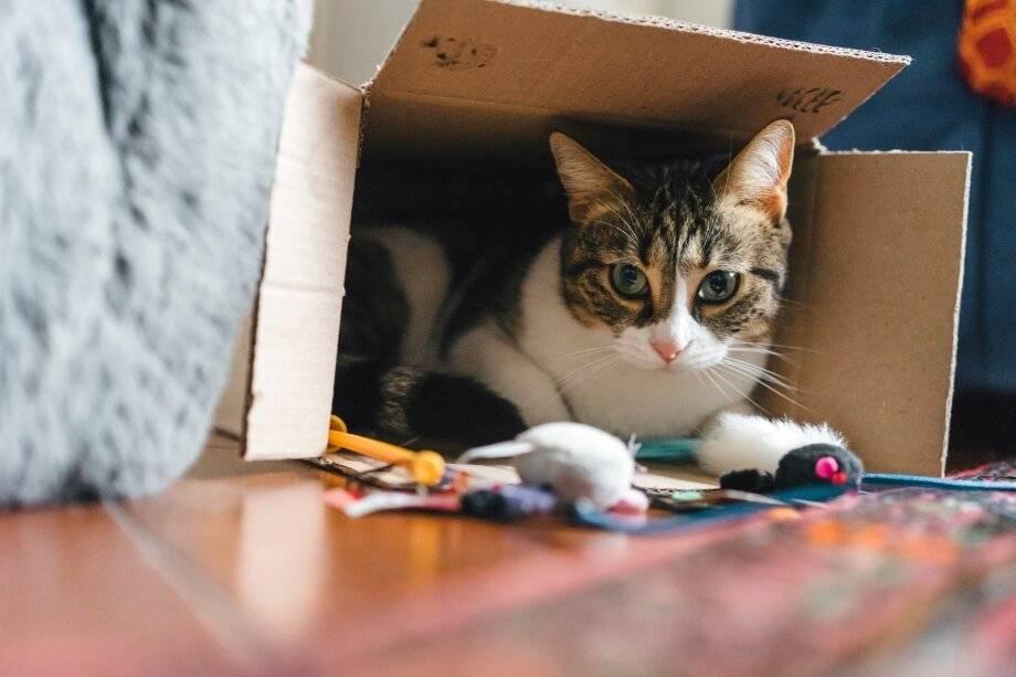 Опасности для котенка в доме: самый полный список