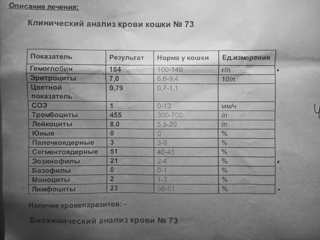 Показатели общего анализа крови у кошек расшифровка
