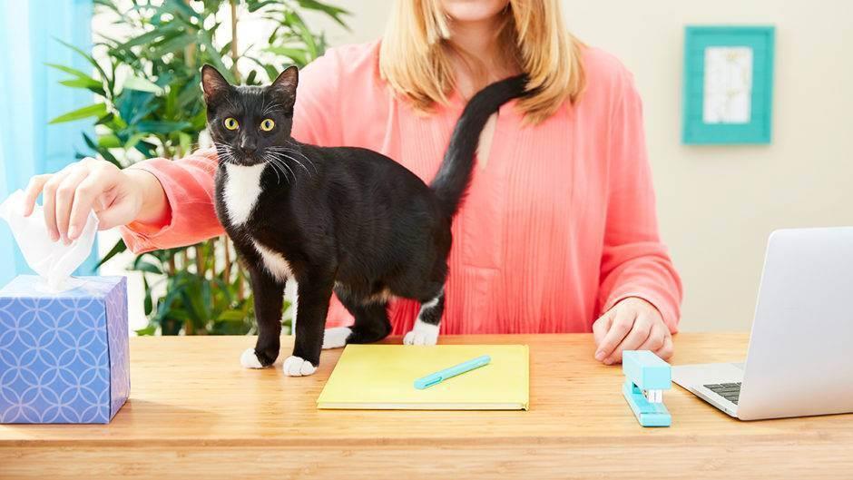 Как проявляются симптомы аллергии на кошек и как избавиться от столь неприятного недуга