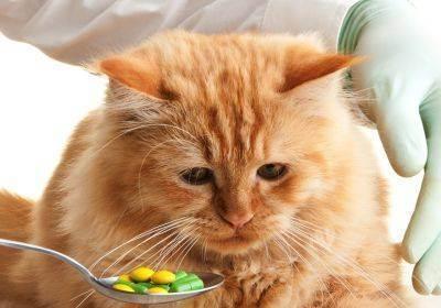 Поражения нервной системы у кошек: болезни и признаки