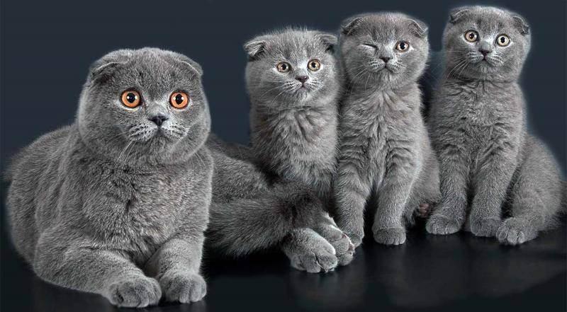 Рекомендации: как назвать котенка девочку?