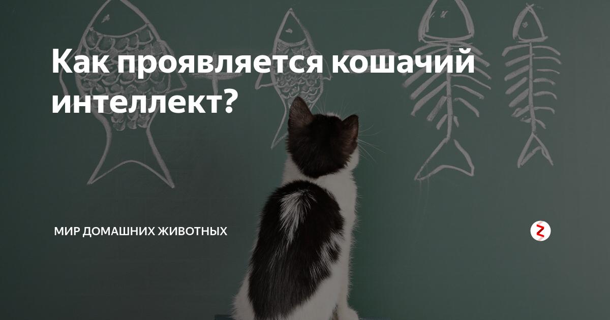 Какие способности присущи кошке