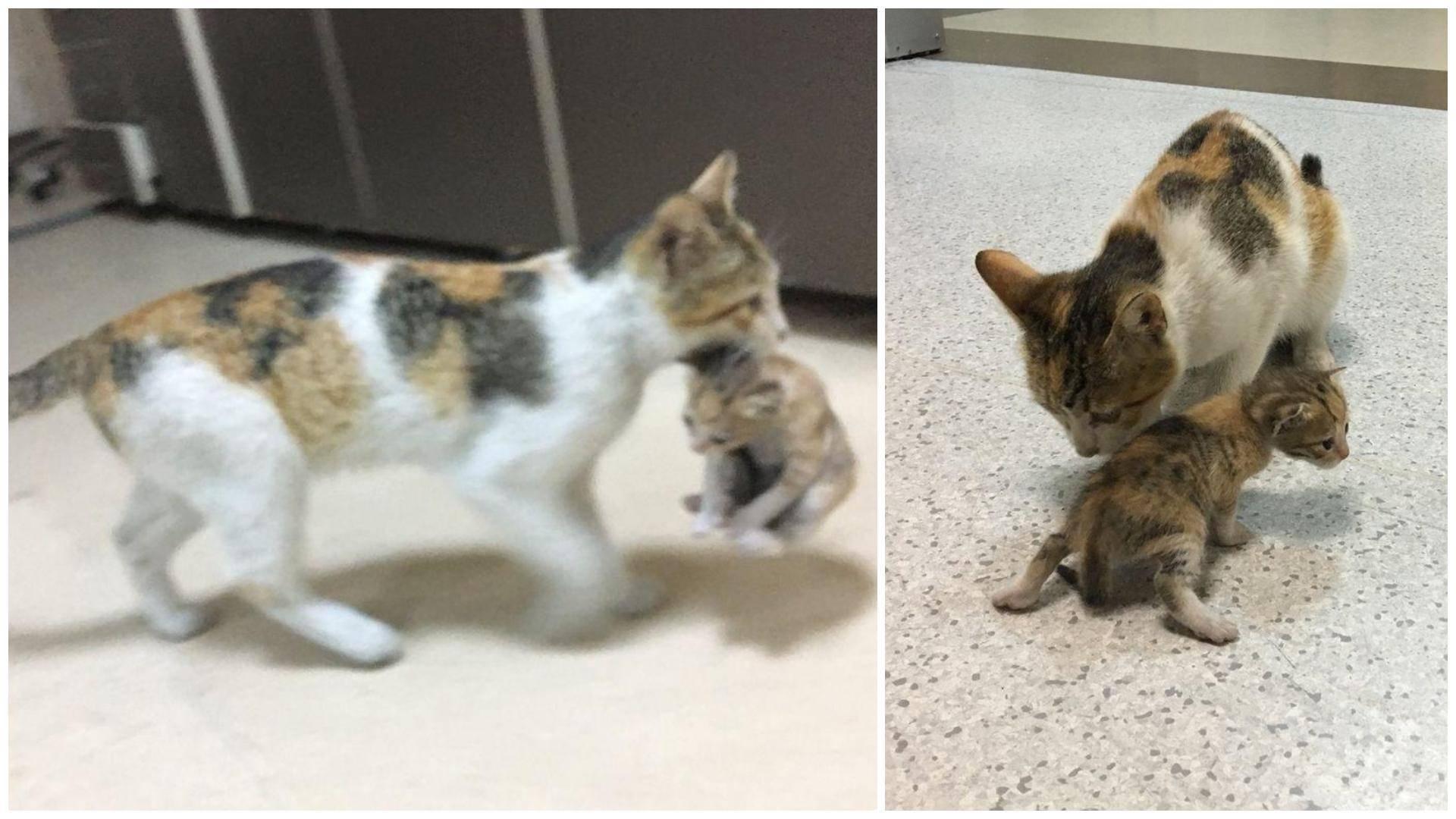Почему кошка таскает котят в другое место почему кошка таскает котят в другое место