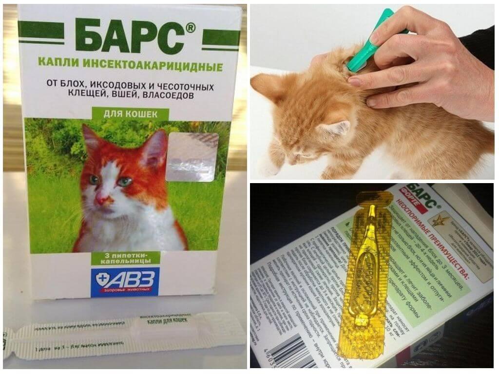 Капли от блох для кошек: критерии выбора и правила использования