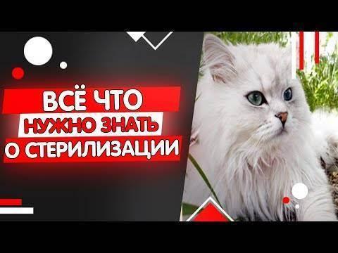 Когда лучше всего стерилизовать кошку?