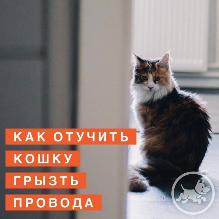 Как отучить кошку грызть провода раз и навсегда?