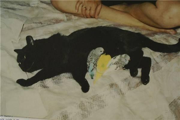 Отравление у кошки: ядами, бытовой химией, продуктами, цветами. симптомы, лечение