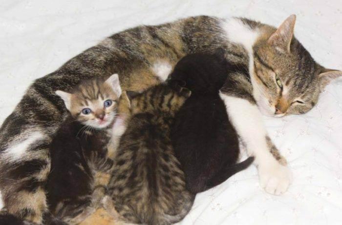 Как ухаживать за новорожденными котятами - wikihow