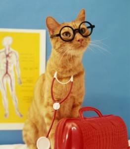 Лечебные свойства кошек для человека. целебное мурчание. как волгоградка доказала лечебные свойства кошек