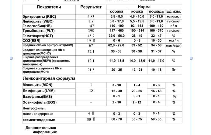 Mcv анализ крови расшифровка у кошек