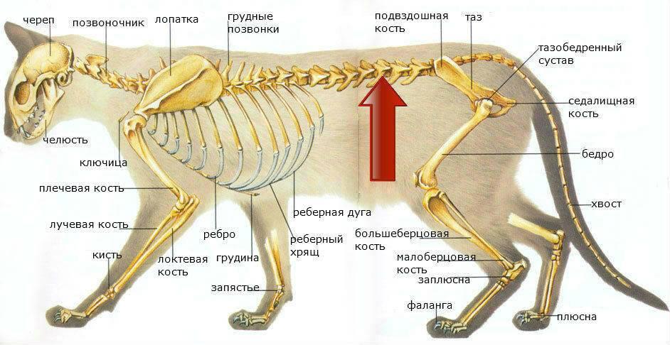Строение и функции скелета человека: название костей их роль в теле человека