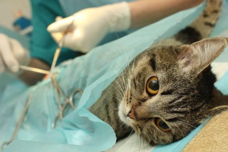 Кошка после прививки