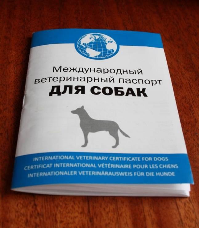 Делаем ветеринарный паспорт животного без хлопот - пошаговая инструкция!