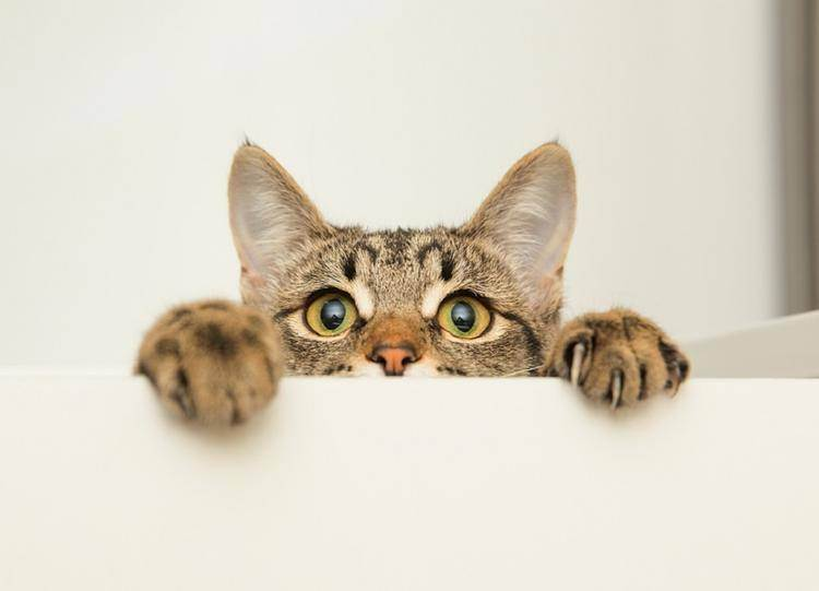 Какая порода кошки подходит вам по знаку зодиака