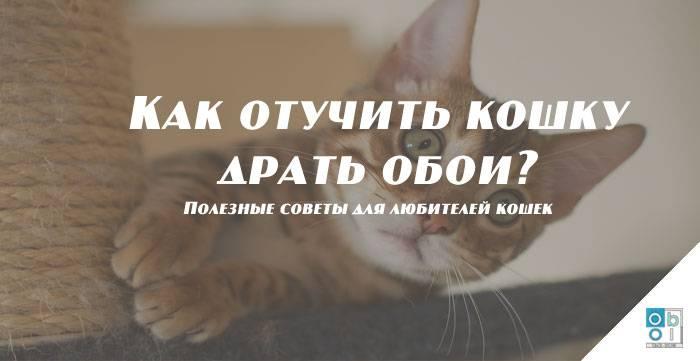 Как отучить кошку гадить в неположенном месте - писать, на кровать, где попало, причины, народные средства