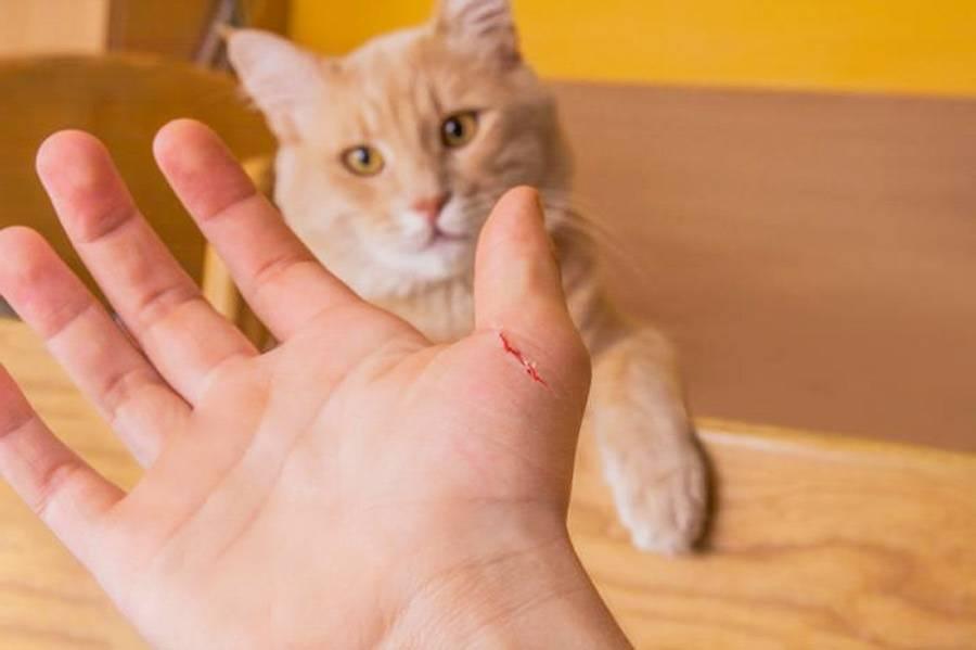 Как отучить кошку царапаться и кусаться