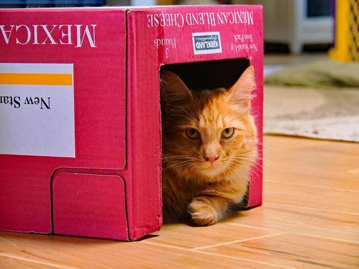Топ-7 причин, почему кошки любят коробки