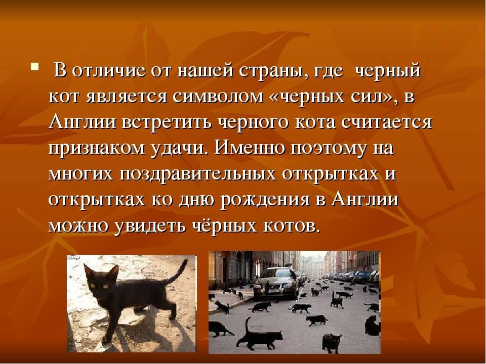 Кошки и приметы, суеверия, связанные с ними: к чему умываются или подобрать домой котенка с улицы, и народные поверья о первых питомцах, крепкой семье в квартире