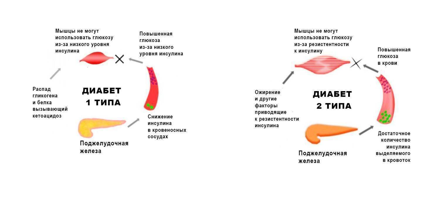У кота повышена глюкоза в крови: причины повышения уровня сахара, методы лечения