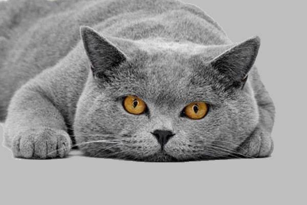 Средства для груминга кошек