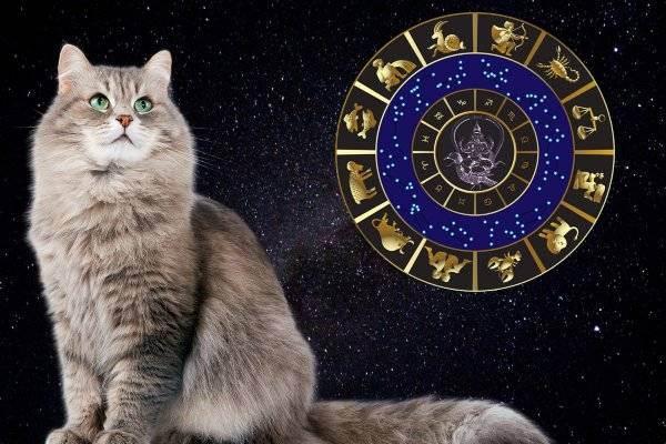 Гороскоп кошек-скорпионов и собак-скорпионов