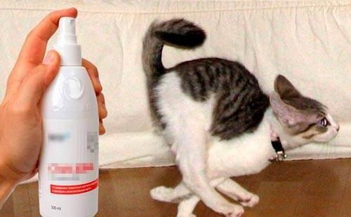 Как избавиться от запаха кошачьей мочи на ковре и ковролине
