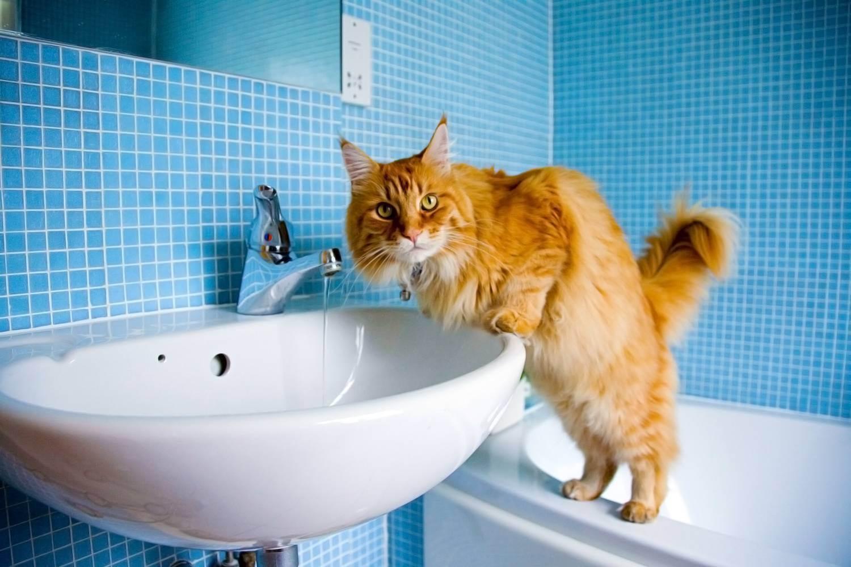 Можно ли давать сырое мясо кошкам, с какого возраста разрешается кормить им котят?