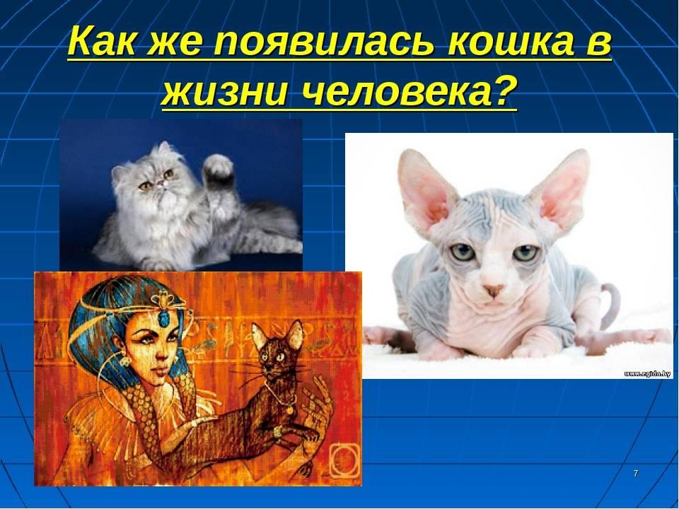 Интересные факты о котах и кошках - всё, о чем вы, возможно, не догадывались