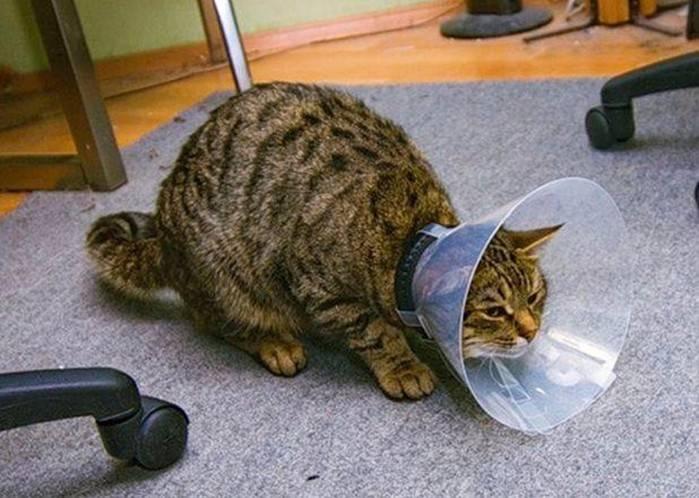 Кошка трясет головой и чешет уши