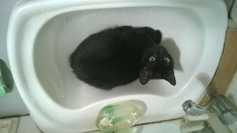 Что делать, если котенок несколько дней не ходит в туалет по-большому: помощь в домашних условиях