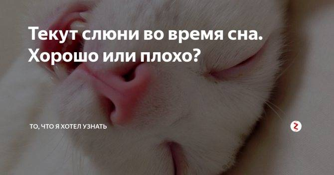 Почему у кота текут слюни и высунут язык? | рутвет - найдёт ответ!