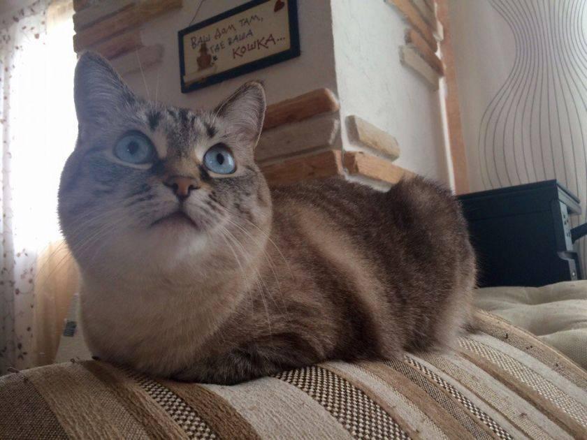 Что делать если котенок вялый после прививки