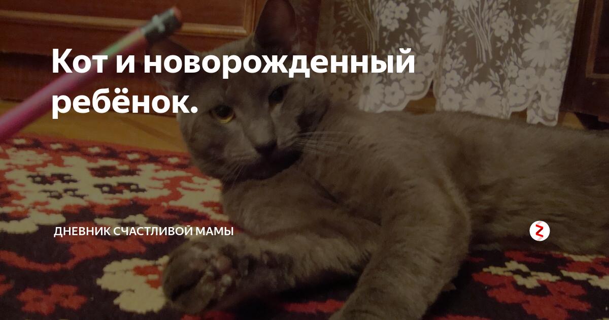Кошка и новорожденный ребенок: как кот реагирует на ребенка в квартире? как он будет к нему относиться?