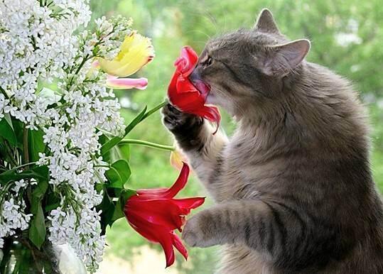 Что делать если кот ест комнатные цветы?