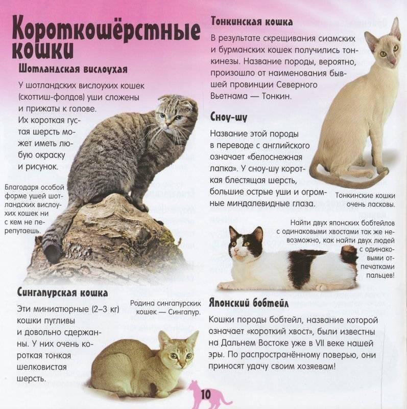 Топ 10 короткошерстных пород кошек - названия, описание и фото — природа мира