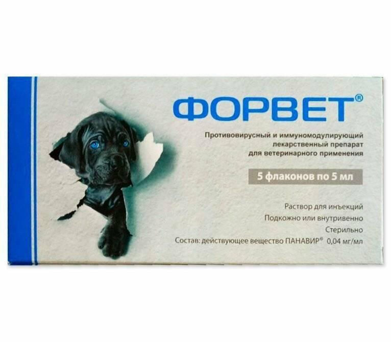 Форвет для собак: инструкция по применению с дозировкой, побочными эффектами, показаниями и аналогами